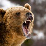 Man survives bear attack
