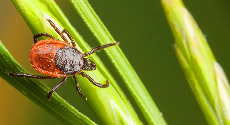 How-to-Prevent-Lyme-Disease