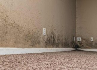 3 Signs You Have Toxic Black Mold in Your Home