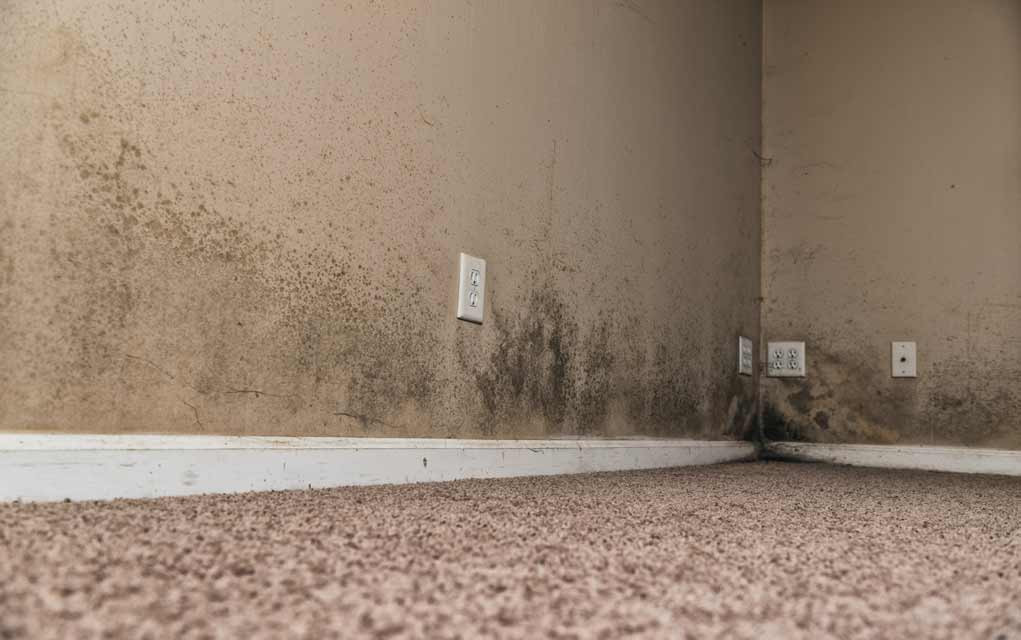 Signs You Have Mold in Your Home