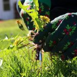 6 Weeds You Can Eat to Survive