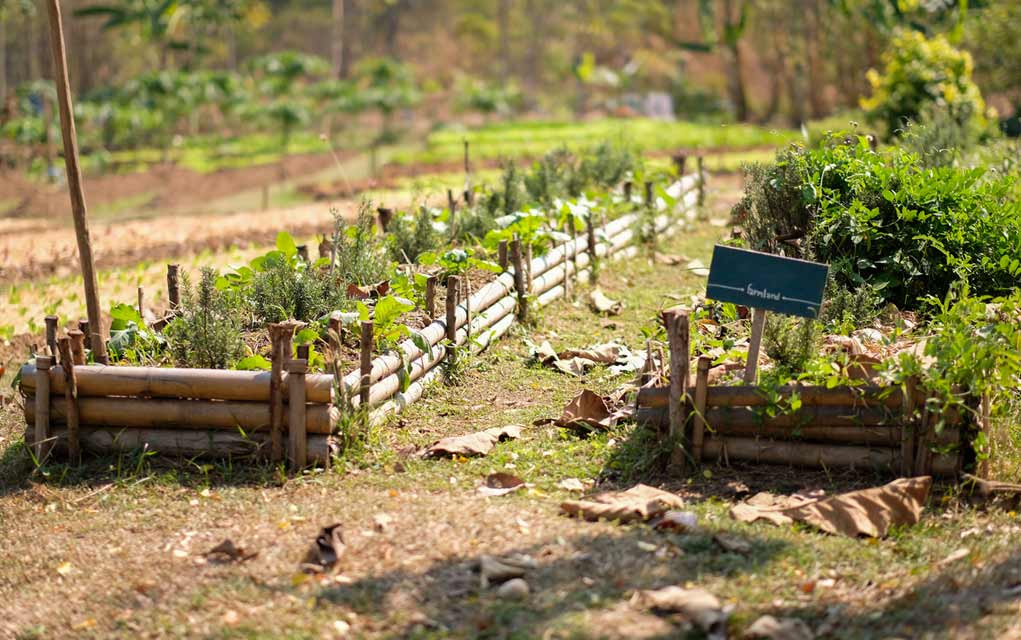 Top 3 Survival Garden Plants