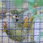 No Monkeying Around for Vaccine Testing