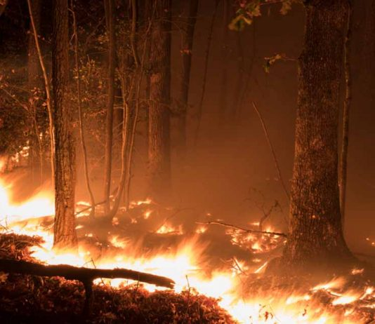 Climate Change or Arsonists?