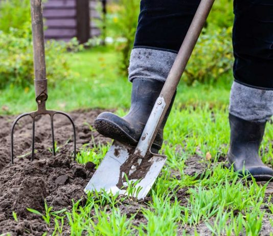Wood Ash for Survival Gardening