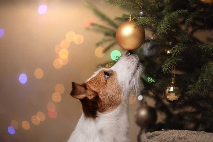Holiday Safety Tips for Pet Owners