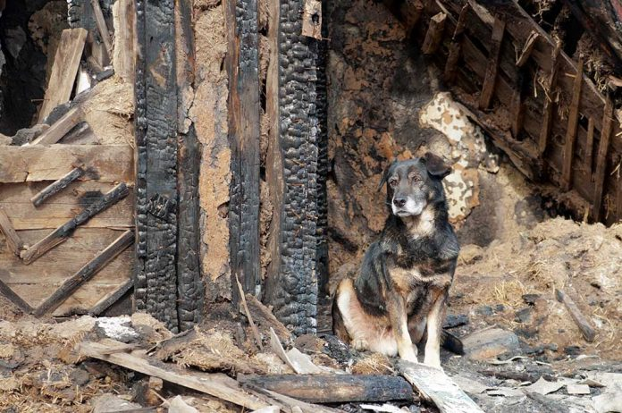 How-to-Prepare-Your-Pet-for-a-Disaster